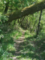 Sentier de Falipot