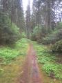 Boucle en Forêt d'Anlier au départ d'Heinstert
