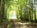 Sentier des Grands Bois à Louhans