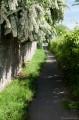 Sentier du chou