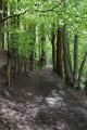 Chemin forestier dans le Parc Départemental Marguerite Yourcenar