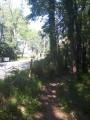 Sentier en sous-bois longeant la route
