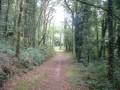 Sentier en sous-bois
