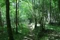 Sentier en forêt