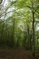 Sentier forestier balisé blanc/vert