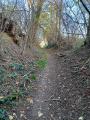 Sentier forestier étroit et escarpé dans certains passages en forêt