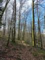 Sentier forestier le long de la rivière