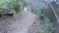 Sentier forestier Saint Michel.