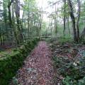 Sentier forestier, vieux mur de pierres sèches.