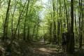 Sentier forestier.