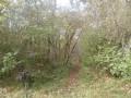 Sentier  qui  mène au pylône.