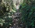 Sentier rustique