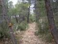 Sentier sous les bois