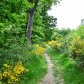 Circuit du Loup dans la Forêt de Bouconne