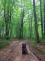 Petite boucle au Bois du Bager