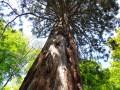 Séquoia 2