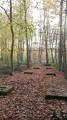 La ceinture verte de la forêt verte