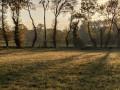 Soleil du matin dans les haies du Finvert