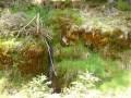 La Maison dans la nature - Col de la Charousse