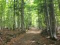 Sous-bois dans la montée vers le Col Oberlauchen