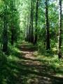 Chemin du Pité