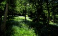 sous-bois du ravin de la Salcette
