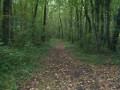 Entre les vignes et les bois de Neulles