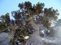 Sous l'arbre de la Queyrie