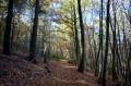 Sous les bois de Duerne
