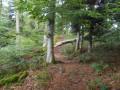 Sur la crète en forêt