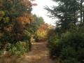 Sur le chemin après les 3 Termes à l'automne