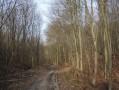 Sur le Chemin des Cotrets
