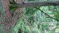 """Sur le chemin du retour - Morceau de forêt près d' """"an der Fiels"""""""