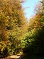 Sur les beaux chemin de l'Altenberg