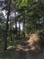 Les coteaux et la forêt de Saint-Michel