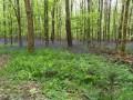 Tapis de jacinthe