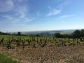 Bois de Montbernange depuis Torvilliers
