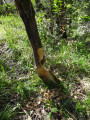 Travail des castors