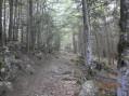 Traversée de forêt