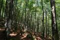 Traversée de la forêt