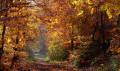 Traversée des bois en automne