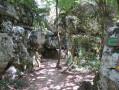Très jolie diversité dans le bois entre roches et arbres