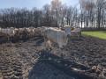 troupeau à l'orée de la forêt