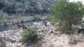 Troupeau de chèvres naines