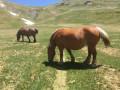 Troupeaux de chevaux