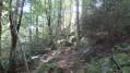 Types de chemins rencontrés dans la forêt