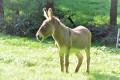 un âne croisé en chemin