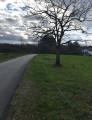 Un arbre crépusculaire