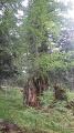 Sommet du Tignous depuis la route forestière du Col d'Aspin.