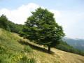 Un arbre derrière l'auberge de Steinwasen